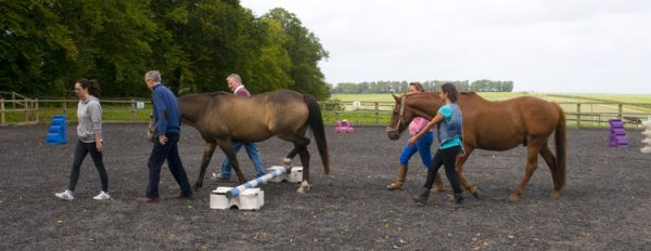 Horse Assisted Education – Waves Training